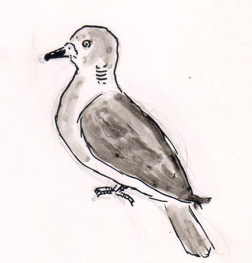 Tuvi (Columba) Autori illustratsioon