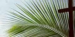 palmioks